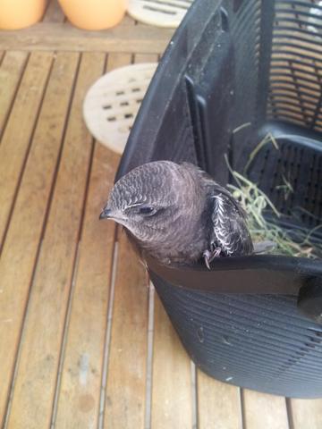 vogel - (Krankheit, Vögel, vogelart)