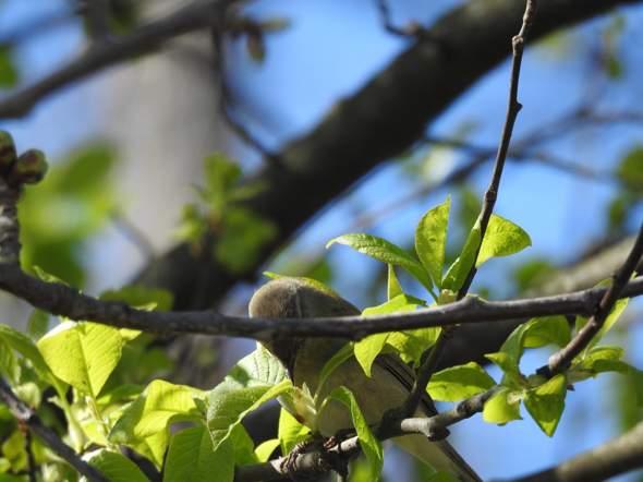 Was ist das für ein Vogel auf dem Bild, ich habe ihn am Obersee in Bielefeld gesehen?