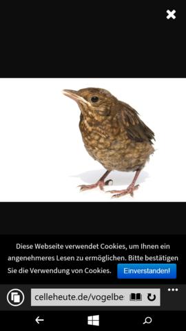 Welcher Vogel ist das? Hab so einen Vogel mitgenommen aber er kann nicht laufen! - (verletzt, vogel gefunden)