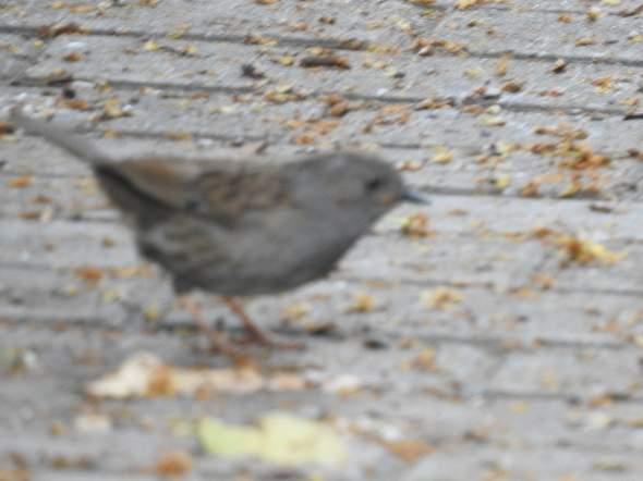 Was ist das für ein Vogel und ist es noch ein Jungtier oder schon erwachsen, ich habe den Vogel am 29. Juni 2020 am Obersee in Bielefeld fotographiert?