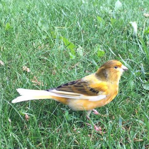 Was ist das für ein Vogel(im Garten gesehn)?