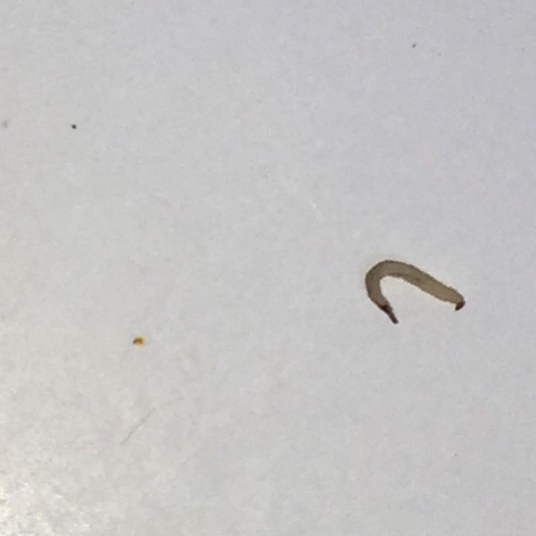 Kleine Würmer In Der Dusche