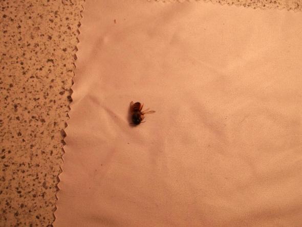 Bild 2 - (Insekten, Bienen)