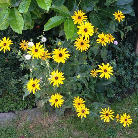 Hier ein Bild - (Biologie, Pflanzen, Blumen)