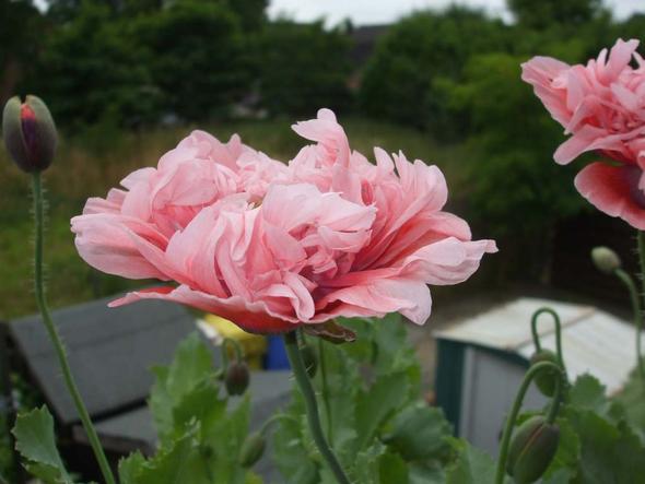 1a - (Pflanzen, Blumen)