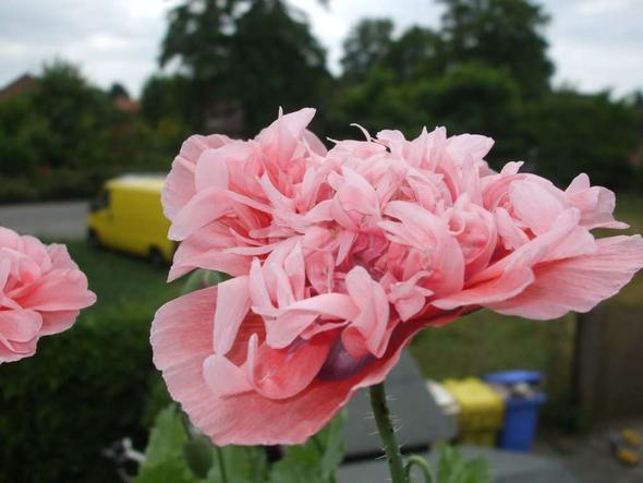 3a - (Pflanzen, Blumen)