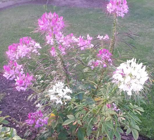 Hier die Blumen! :D - (Garten, Blumen)