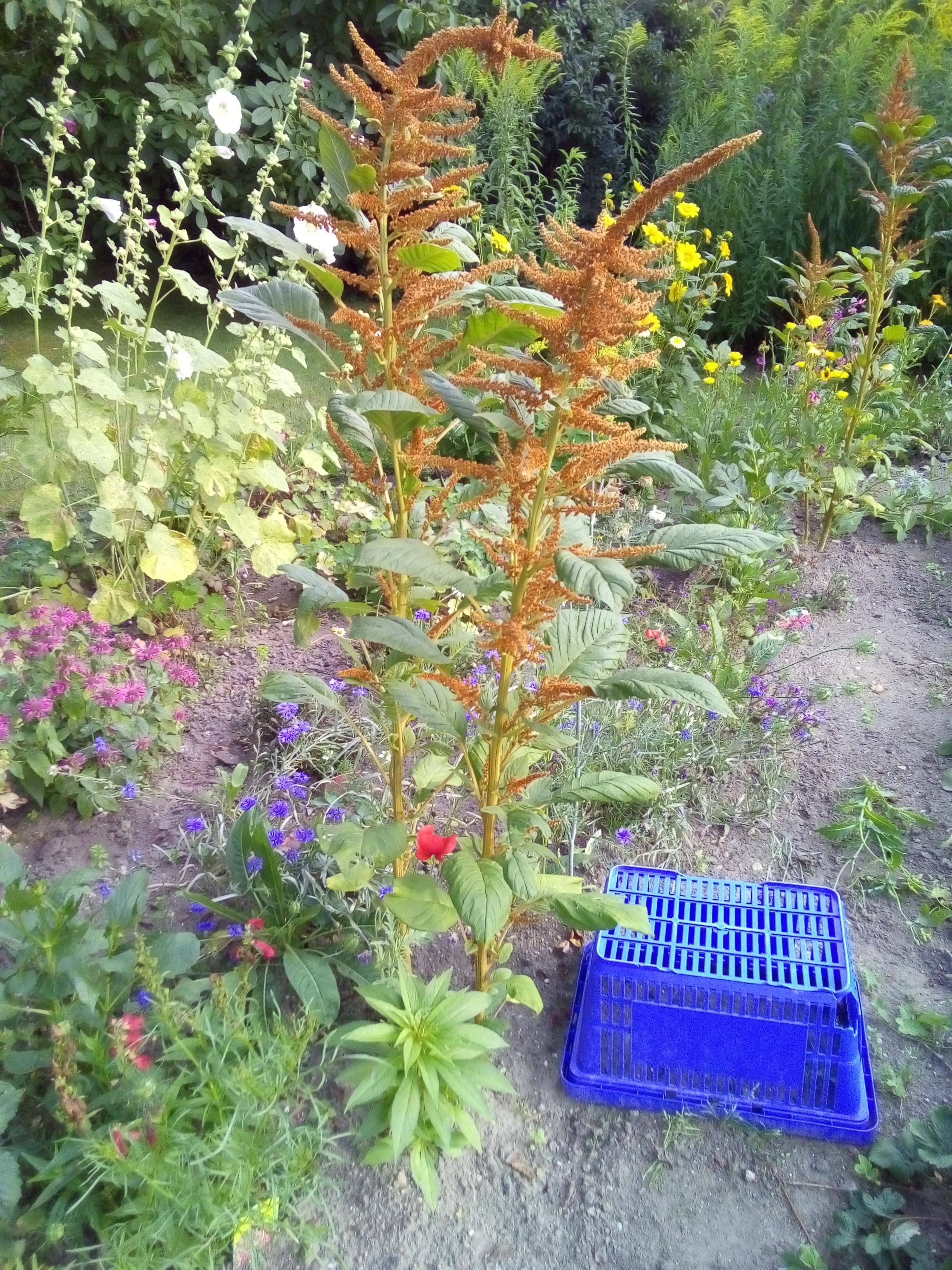 Pflanzenbestimmung Garten