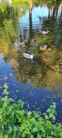 Was ist das für eine Ente?