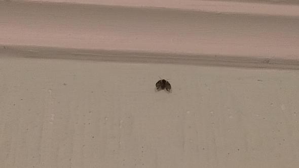 Fliege - (Insekten, Ungeziefer)