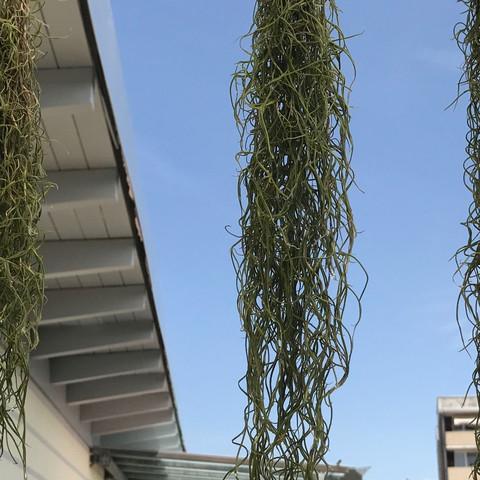 Alle drei - (Pflanzen, Thailand, Pflanzenbestimmung)