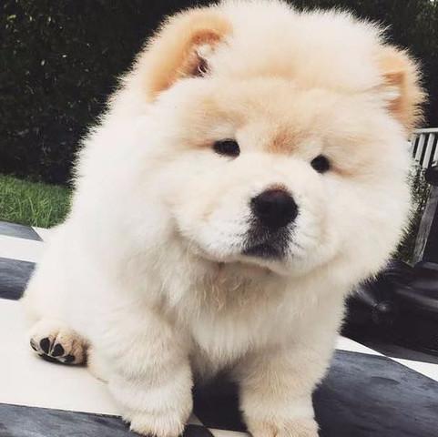Hund von Justin - (Hund, Rasse)
