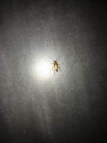 Was ist das für eine Insekt?