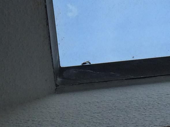 Was ist das für eine Insektenart (mit Foto)?