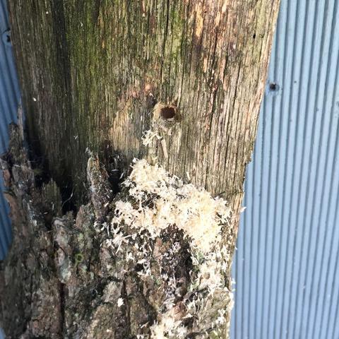 Was ist das für eine Insektenhöhle im Deko-Baumstamm ...