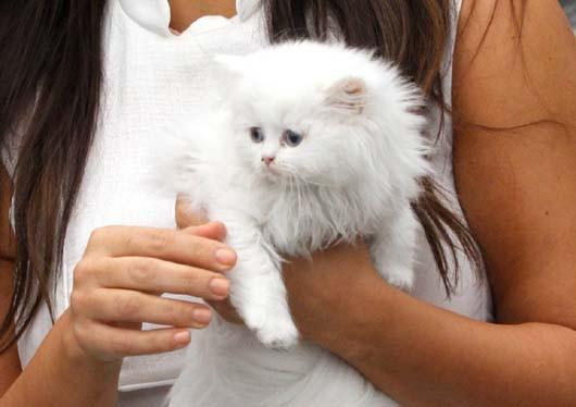 was ist das f r eine katze und wie viel kosten solche katzen tiere tierheim. Black Bedroom Furniture Sets. Home Design Ideas