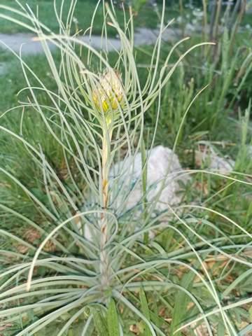 Was ist das für eine komische Pflanze in meinem Garten?