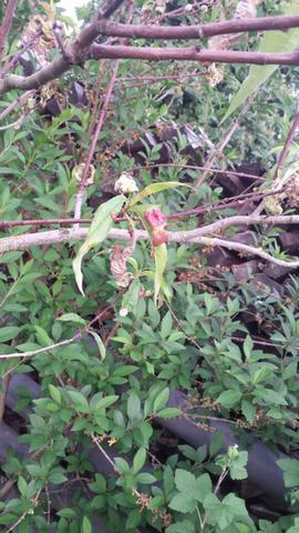 Baum - (Pflanzen, Baum, Pflanzenpflege)