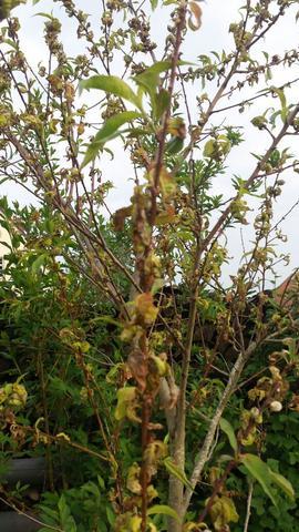 Einzelnes Baltt - (Pflanzen, Baum, Pflanzenpflege)