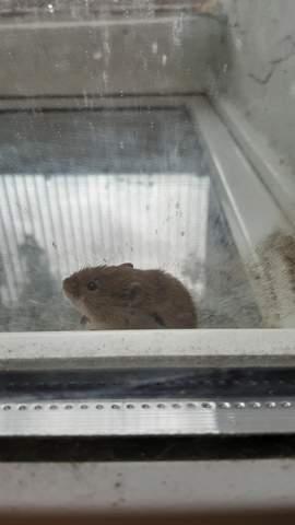 Was ist das für eine Maus und warum will sie hier einbrechen?