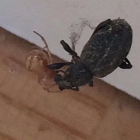 Abgesehen vom Käfer :D - (Biologie, Spinne)