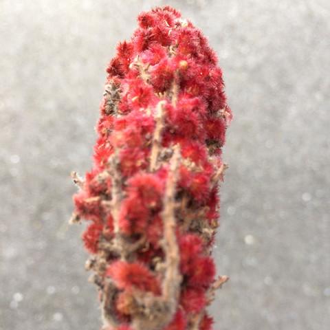 was ist das ?? - (Pflanzen, Cannabis)
