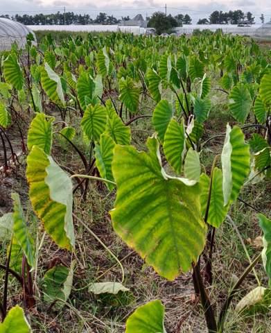 Was ist das für eine Pflanze auf dem Feld?