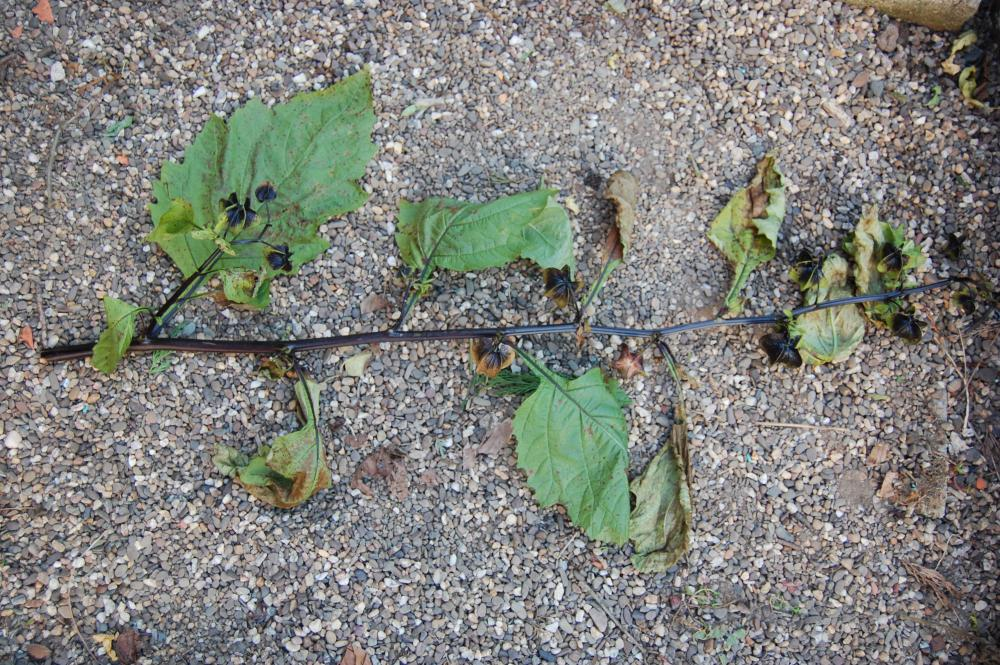 was ist das f r eine pflanze bilder pflanzen pflanzenbestimmung
