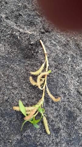Was ist das für eine Pflanze? Giftig für Pferde?
