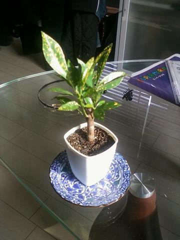 ♥♥ - (Garten, Pflanzen, Pflanzenpflege)
