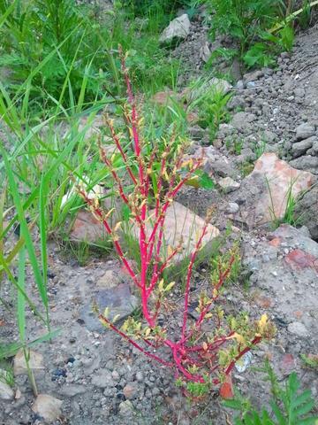 was ist das für eine pflanze/ kraut?