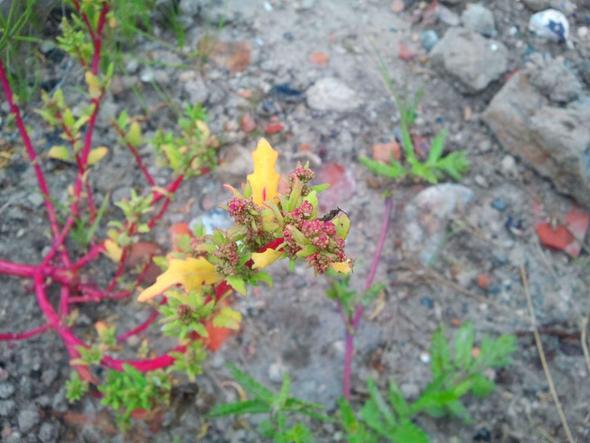 kraut - (Garten, Pflanzen, Kräuter)