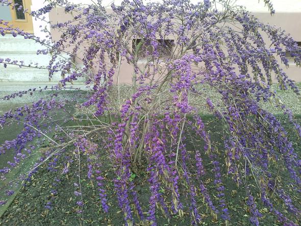 lkkjlkj - (Pflanzen, Botanik, Gärtner)