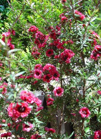 Name? - (Pflanzen, Blumen, flora)