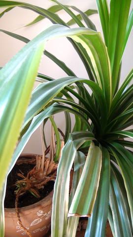 Was ist das für eine Pflanze und ist sie für Haustiere giftig?