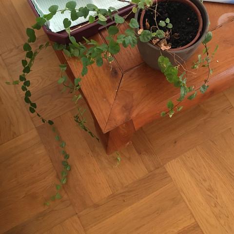 Bild1 - (Garten, Pflanzen, Zimmerpflanzen)