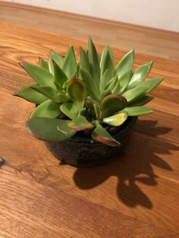 Was ist das für eine Pflanze und wie giessen?
