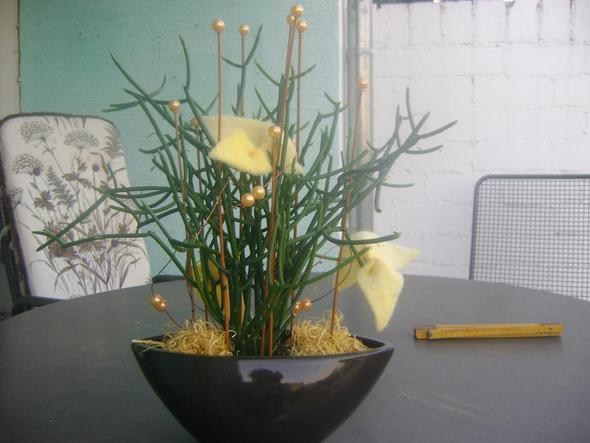 was ist das f r eine pflanze und wie muss ich sie pflegen. Black Bedroom Furniture Sets. Home Design Ideas