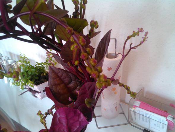 Bild 1 - (Pflanzen, Botanik)