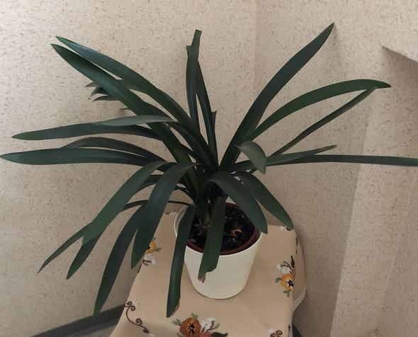 Pflanze im Treppenhaus - (Pflanzen, Botanik, Zimmerpflanzen)