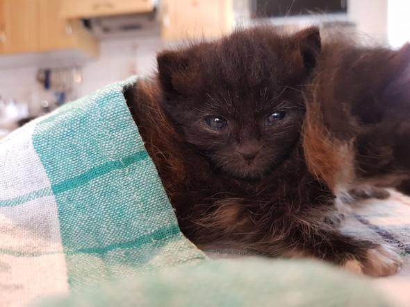 Katze1 - (Tiere, Katze)