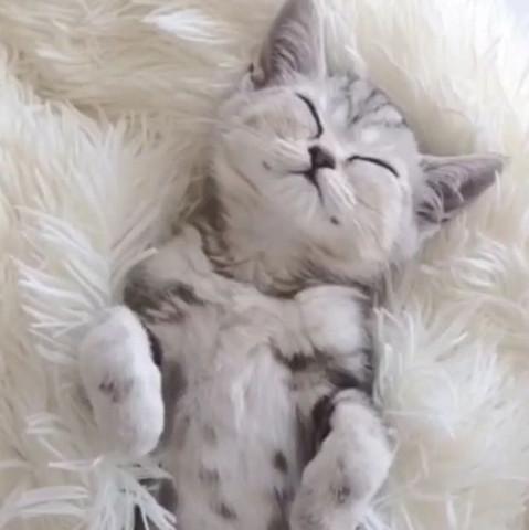 Katze grau weiß  - (Tiere, Katze, Kosten)