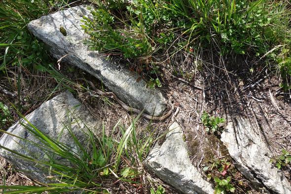 Schlange01 - (Tiere, Italien, Reptilien)