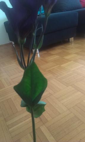 Blatt - (Blumen, Botanik)
