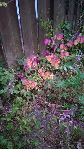 Was ist das für eine seltsame lila Pflanze?
