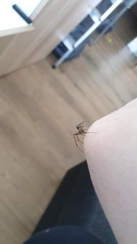 Was ist das für eine Spinne?