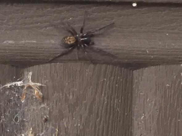Besagte Spinne auf meinem Blumenkasten  - (Biologie, Spinnen)