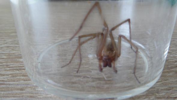 Spinne - (Computer, Freizeit, Gesundheit)