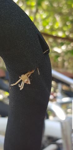 Was ist das für eine Spinne? Gefunden in Mexiko?