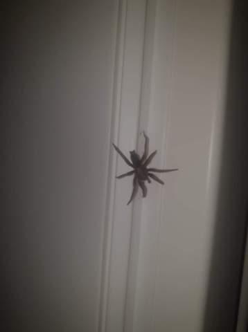 Was ist das für eine Spinne?!? Hilfe?